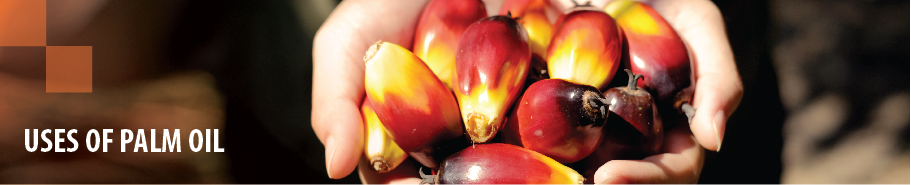 Uses of Palm Oil-01.jpg